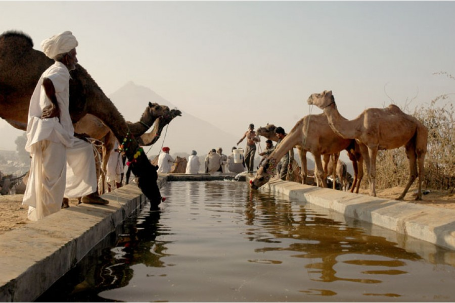 Golden-Triangle-Tour-with-Pushkar-Camel-Fair