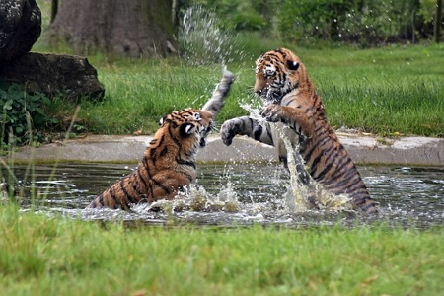 Golden-Triangle-Tour-with-Ranthambore-wildlife-Tiger-Safari-Tour-Packages
