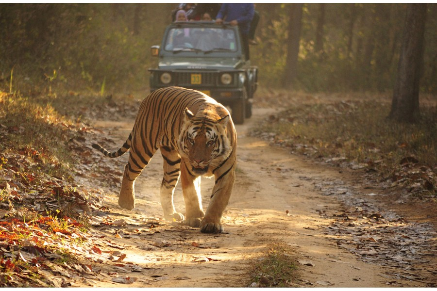 Golden-Triangle-Tour-with-Ranthambore-Tigers